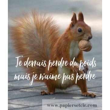 """Carte Humour Ecureuil Je devrais perdre du poids mais je n'aime pas perdre!"""""""