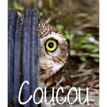 "Carte Humour Chouette ""Coucou"""
