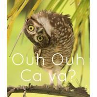 """Carte Humour Chouette """"Ouh Ouh ça va?"""""""