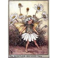 "Carte ""Fées des Fleurs"" Cicely Mary Barker ""Marguerites"""