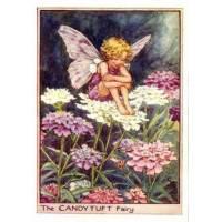 """Carte """"Fées des Fleurs"""" Cicely Mary Barker """"Corbeille d'Argent"""""""