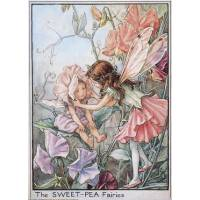 """Carte """"Fées des Fleurs"""" Cicely Mary Barker """"Pois de Senteur"""""""