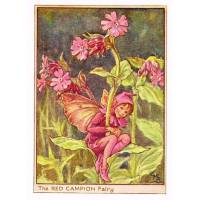 "Carte ""Fées des Fleurs"" Cicely Mary Barker ""Silène rouge"""