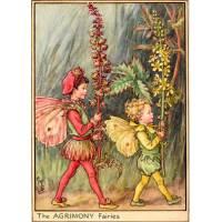 """Carte """"Fées des Fleurs"""" Cicely Mary Barker """"Eupatoire"""""""