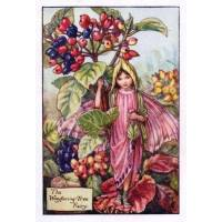 "Carte ""Fées des Fleurs"" Cicely Mary Barker ""Viburnum"""