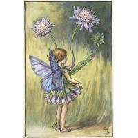 "Carte ""Fées des Fleurs"" Cicely Mary Barker ""Scabieuse"""