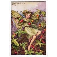 "Carte ""Fées des Fleurs"" Cicely Mary Barker ""Bryone"""