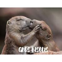 "Carte ""Gros Bisous""Petites Marmottes"