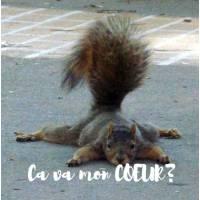 "Carte ""Ca va mon coeur""? Ecureuil"