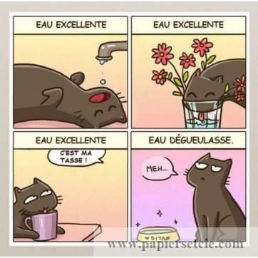 """Carte Chat """"Moi, mon chat et son eau"""""""