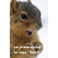 """Carte Humour Ecureuil""""Les princes existent...au rayon Biscuits"""""""