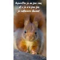 "Carte Humour Ecureuil ""Aujourd'hui je ne fais rien, et si je n'ai pas fini, je continuerai demain..."""