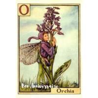 Carte Anniversaire Fées des Fleurs Orchidée sauvage