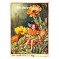 Carte Anniversaire Fées des Fleurs Calendula
