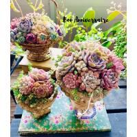 """Carte Anniversaire """"Bon Anniversaire Bouquet de Succulentes"""""""