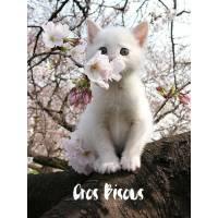 """Carte """"Gros Bisous"""" Chaton blanc et Fleurs de Pommier"""