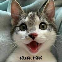 Carte Gros Bisous Chat: Coucou, Bisous Petit chat heureux