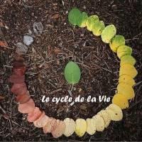 """Citation sur la Vie """"Le cycle de la Vie"""""""