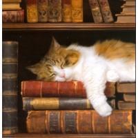 Chat endormi parmi les livres
