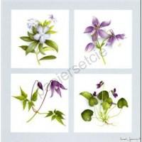 Carte Vincent Jeannerot Les fleurs violettes