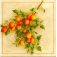 Carte Vincent Perriol: Abricots du Roussillon