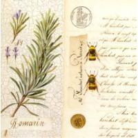 Carte Pascal Cessou Romarin
