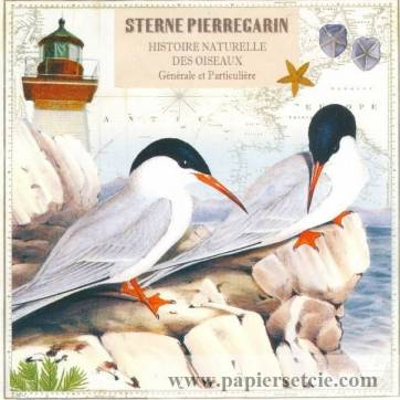 Carte d'art Gwenaëlle Trolez Sterne Pierregarin
