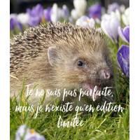 """Carte Humour Hérisson """"Je ne suis pas parfaite, mais je n'existe qu'en édition limitée"""""""